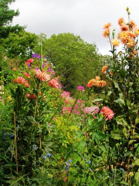 moreniceflowers