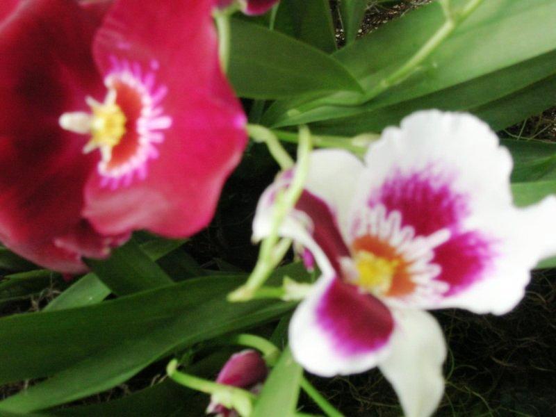 orchidshow5022506