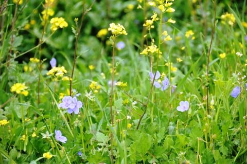 satafspringflowers
